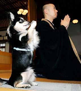cachorro-rezando-monge